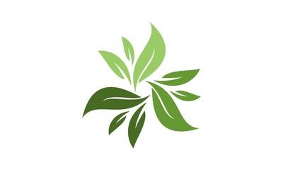 Leaf Logo 30