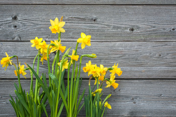 Deurstickers Narcis Spring daffodils against old wooden background