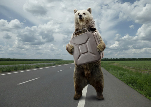 Bear canister,standing on the road.