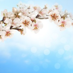 Blooming tree branch on bokeh background.
