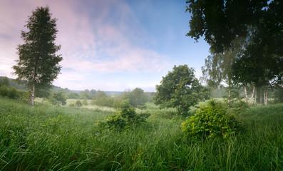 Панорама утро туман пейзаж дуб березы