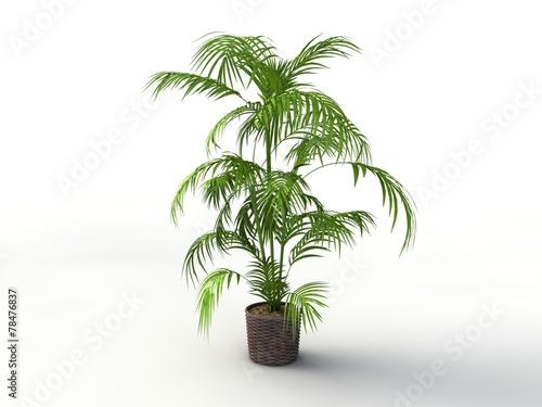 3d palme zimmerpflanze stockfotos und lizenzfreie - Zimmerpflanze palme ...