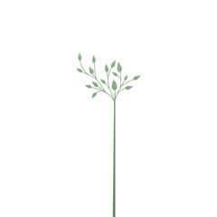 elegant branch