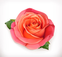 Pink rose vector illustration