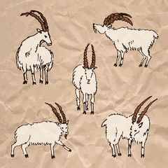Hand drawn set of goats on crumpled kraft paper