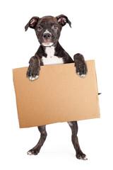 Fototapete - Puppy Holding Blank Cardboard Sign