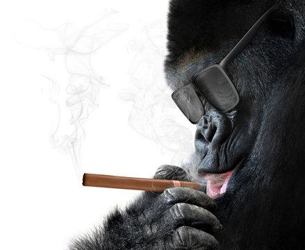Badass gorilla with cool sunglasses smoking a cigar like a boss