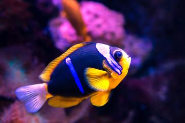 Tropenfisch im Riff