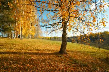 Пейзаж осень березы вечер октябрь