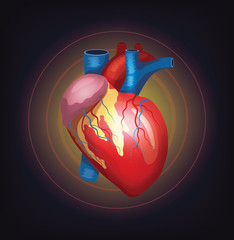 Vector realistic heart illustration