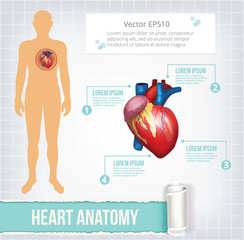 Vector heart infographics banner illustration