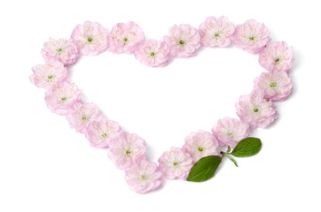 pink flowers in heart shape on white background