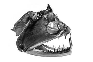 skull of fish