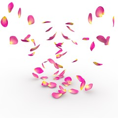 Rose petals on isolated background