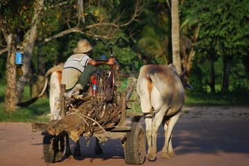 Scène rurale, Cambodge