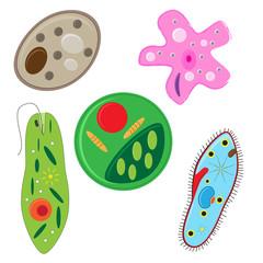 vector illustration of unicellulars schemats set