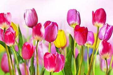 Obraz Kwiaty tulipany - fototapety do salonu