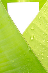 carte blanche dans enveloppe feuille bananier