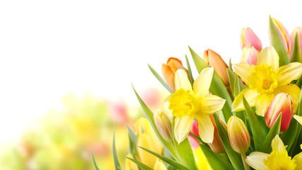 Freisteller Tulpen und Narzissen zu Ostern