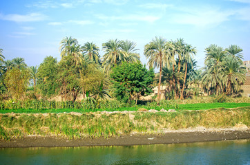 Egypt. Oasis next to the channel of Nile river