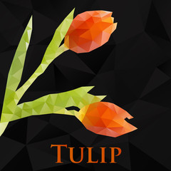 Vector tulip. Abstract flowers geometric. Polygonal design eps10