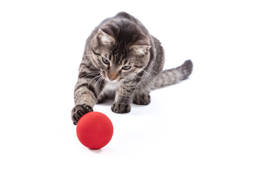 Tabby Cat Playing with Ball