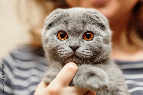 alley cat pet food