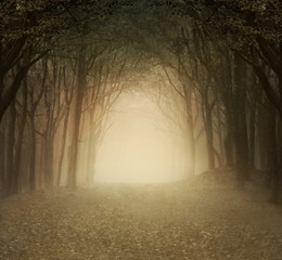 Gold foggy forest