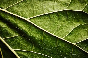 Green leaf Wall mural