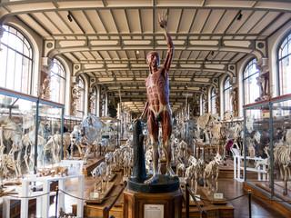 Galerie d'Anatomie comparée et de Paléontologie