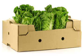 """little gem"" lettuce in a cardboard box on a  white background"