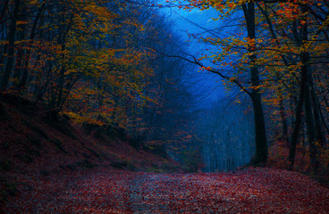Beautiful evening colours in forest