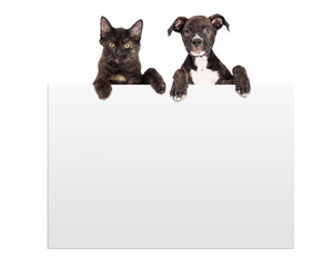 Fototapete - Puppy and Kitten Hanging Over Sign