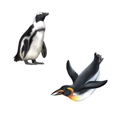gentoo penguin. Vector illustration isolated on white background