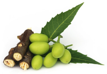 NEEM twigs FOR ORAL HEALTH