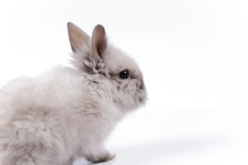 Easter bunny on white background isolated
