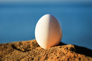 Egg on the stone