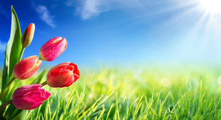 Wall Mural - Spring and easter background with tulips in sunny meadow