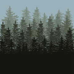 Silhouette of fir trees scape