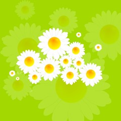 Bright summer background with camomile flowers