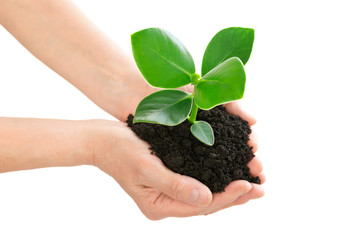 Hands holding green plant ecology concept