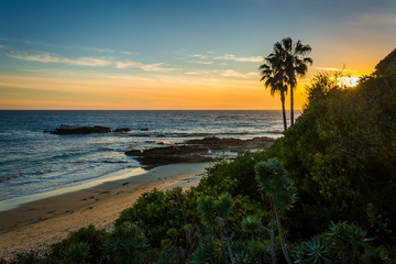 View of palm trees and the Pacific Ocean from Heisler Park, in L