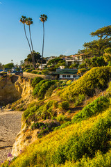 View of palm trees on a cliff at Heisler Park, in Laguna Beach,