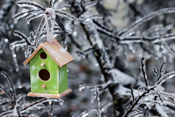 Birdhouse hanging in tree after ice storm