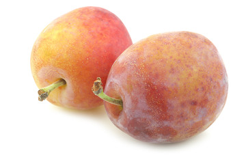 fresh ripe red and yellow plums on a white background