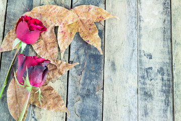 Close up red rose and dry leaves on a wooden background