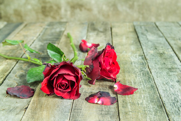 Fresh red rose on a wooden background.