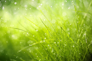 Photo sur Aluminium Herbe Morning dew on spring grass
