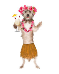 Dog Hula Dancer With Drink