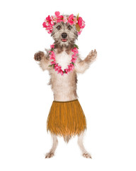 Dog Hula Dancer